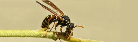 wasps dublin