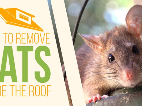 How Do Pest Control Get Rid of Rats?