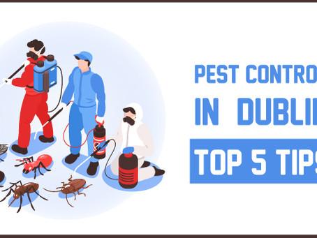 Pest Control in Dublin: Top 5 Tips