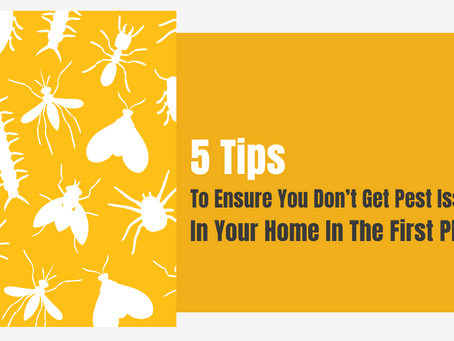 5 Tips to Ensure You Don't Get Pest Issues In Your Home In The First Place