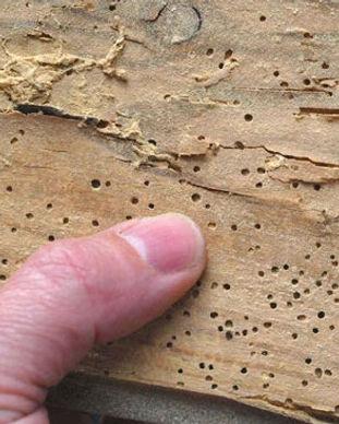 woodworm dublin