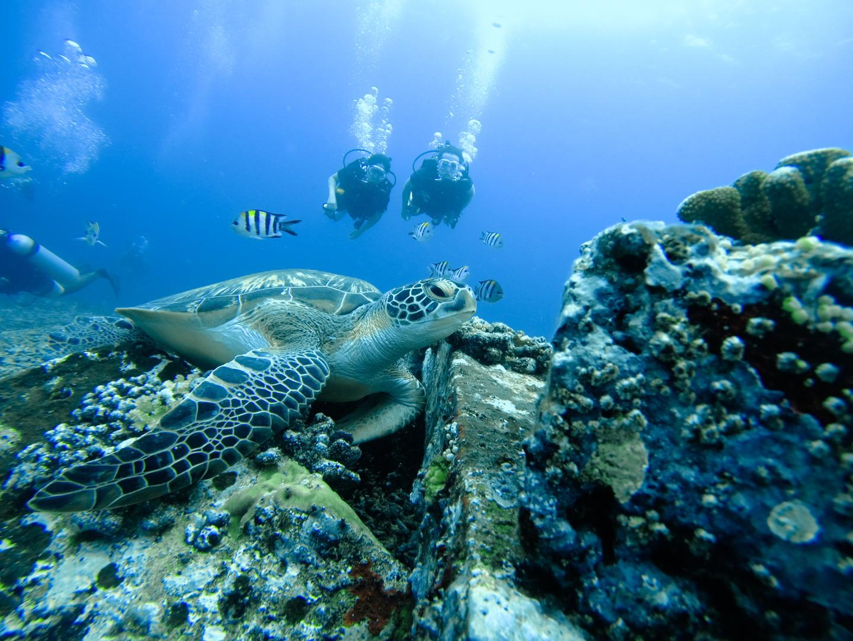 Sea Turtles on Gili Meno