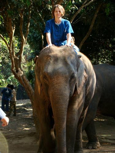 Elephant Sanctuary in Thailand.jpg
