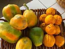 fruits du verger samana 2.jpg