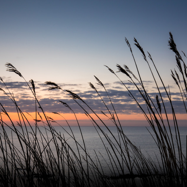 Reeds, Saltwick Bay, UK