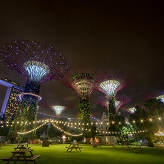 Super Trees, Singapore