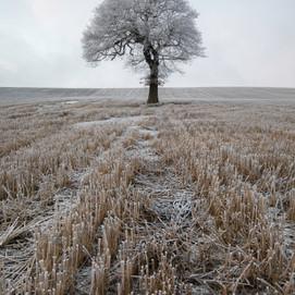 Winter Tree, West Yorkshire, UK