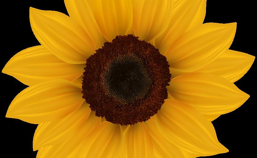 kissclipart-sunflower-png-clipart-clip-a