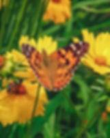 butterfly 2_edited.jpg