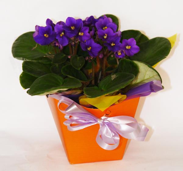Vaso de for Violeta R$ 30