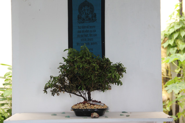 Our brains are like bonsai trees, growing around our private versions of reality
