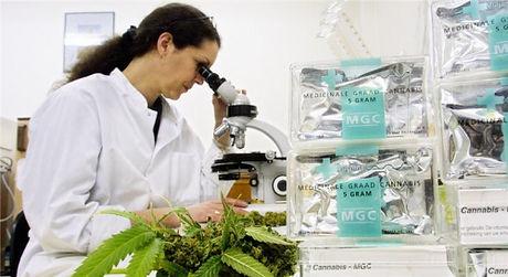 500px-Canna_Lab_Lady_at_Microscope.jpg