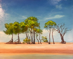 Lee Point mangroves (SOLD)