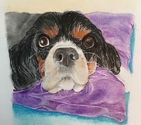 Dog Pencil & Pastel portrait