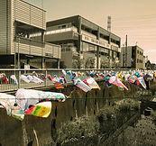 Carp flags displayed along a Tokyo river