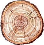 Tree%20Trunk_edited.png