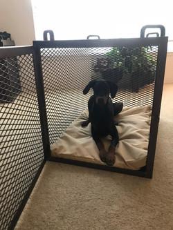 Custom Steel Dog Crate