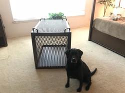 Custom Dog Crate