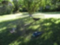 Myna birds 1.jpg