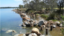 Unwanted tree stumps recycled to restore river health