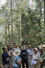 Eucalyptus Identification Workshop