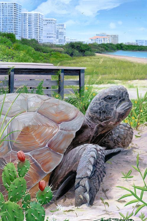 """Tigertail Tortoise"""