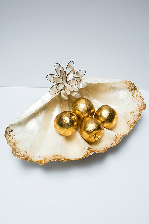 Clam Shell Gold Leaf