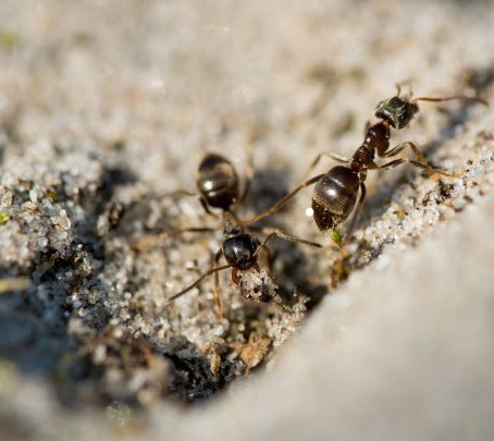 Ant Pest Control: How to Ant-Proof Your House