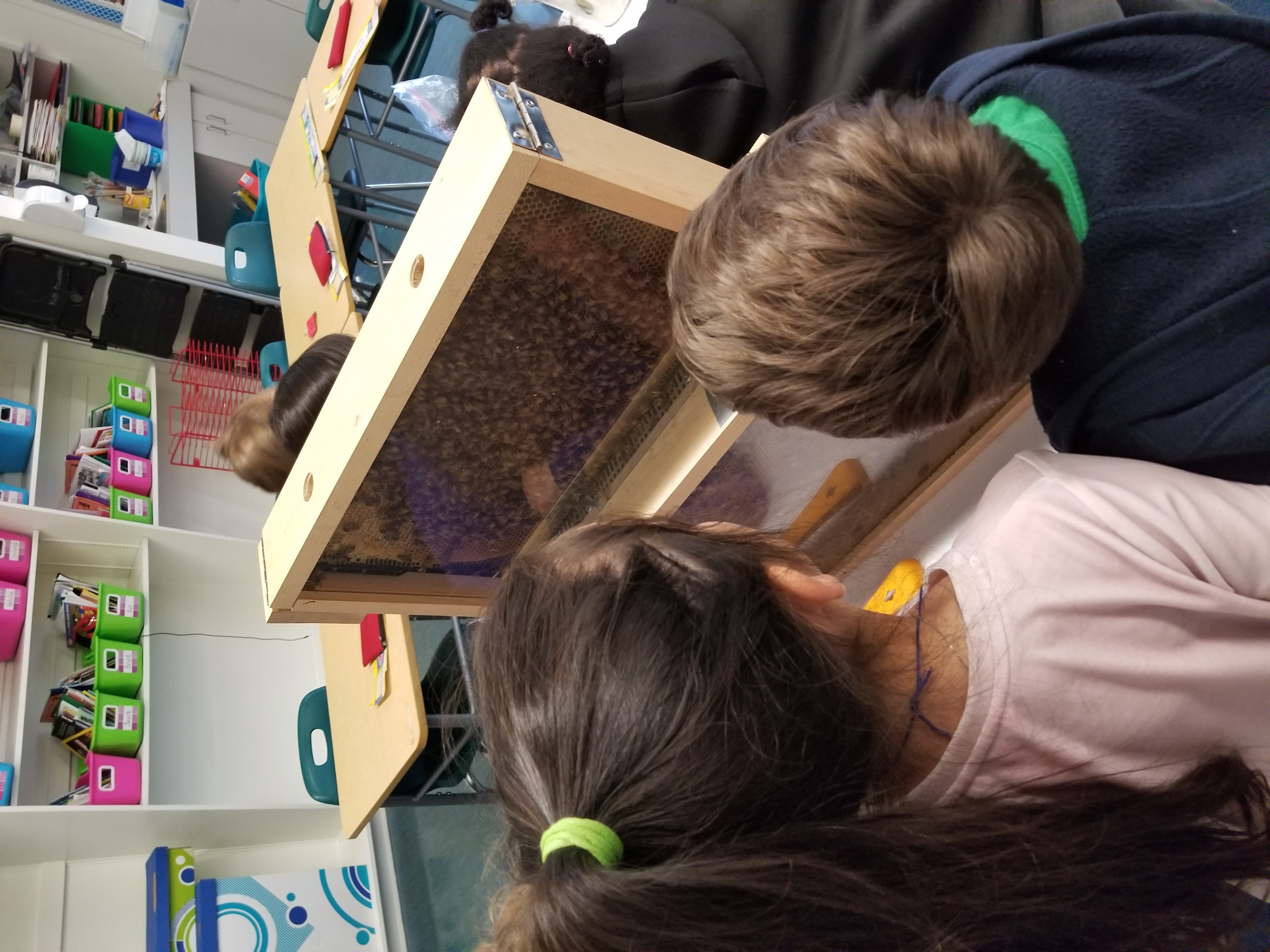 Our Observation Hive