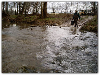 macroinvertebrate surveys