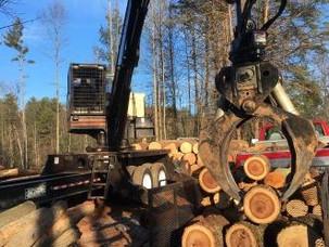 The BTU's of Firewood