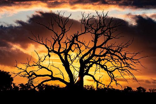Dead Tree Glow