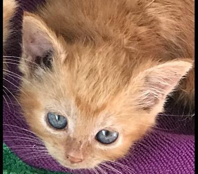 Hub Club Kitten Rescue - Yoda