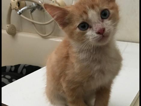 Hub Club Kitten Rescue - Sega