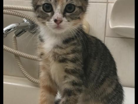 Hub Club Kitten Rescue - Mabel