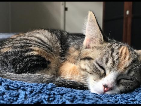 Hub Club Kitten Rescue - Nap Time