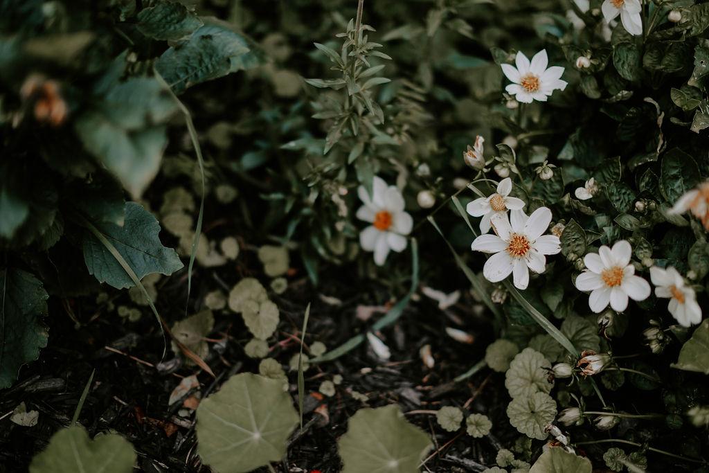 WhitneyNicholsPhotography-9588