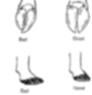 breed standard feet_edited.png
