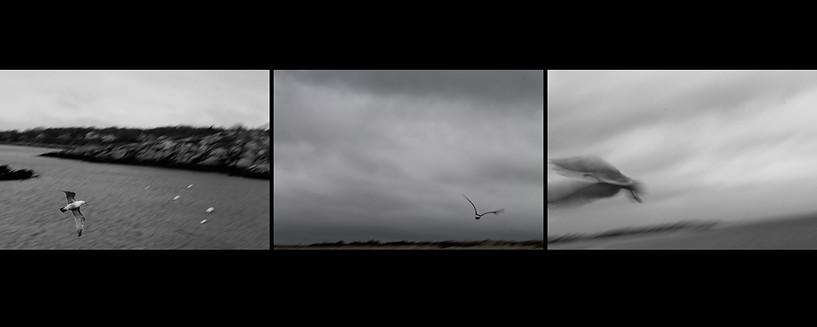Bird_Triptych.jpg