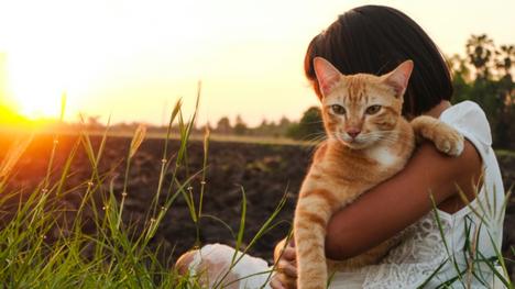 Compreendendo melhor os donos de animais de estimação de hoje