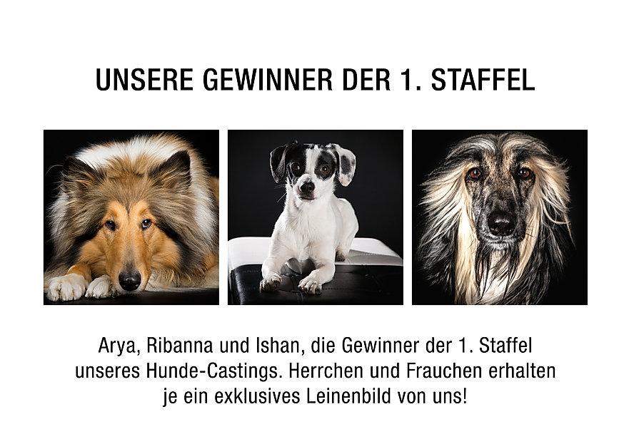 HundeGewinner_staffel1.jpg