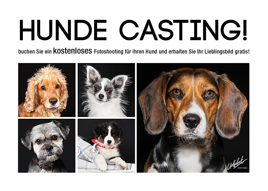 HundeCasting_Version_3_2.jpg