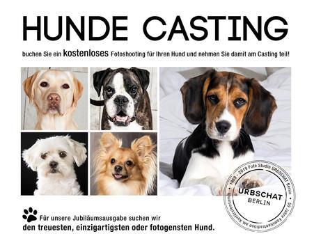 Hunde Casting