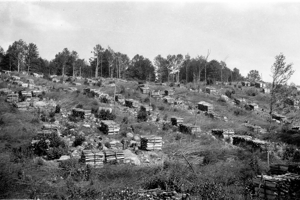 A scene common 100 years ago—clearcut hillside, with bundles of cordwood to be used for charcoal.