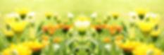 Kruidenadvies - bloemen