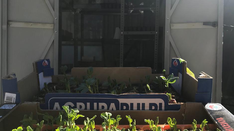 Ja estem llestos per plantar