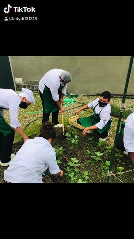 Collint males herbes i segona tongada de germinats