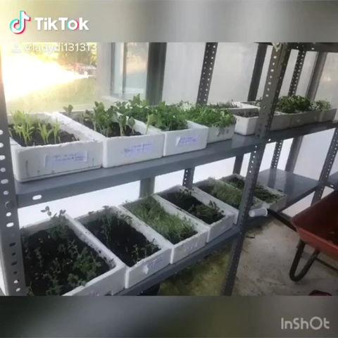 Els nostres germinats acaben als plats del restaurant de l'EHO