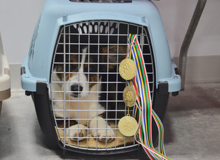 What is crate training?