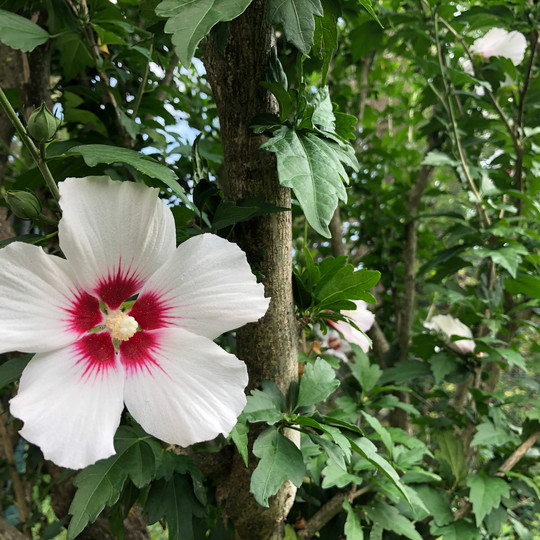 Fiore all'occhiello